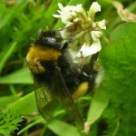Bee foraging skills impaired by neonicotinoid pesticides