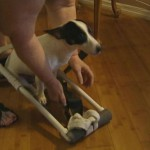 Paralyzed dog gets homemade wheelchair from store employees