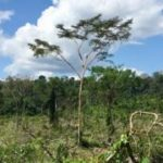 'Football pitch' of Amazon forest lost every minute