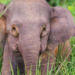 Endangered elephant shot 70 times, tusks hacked off, officials say