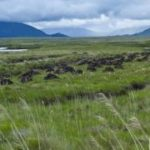 Climate change: Widespread drying of European peatlands