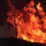 Climate change: Australia fires will be 'normal' in warmer world