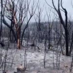 Australia wildfires 'contained' in New South Wales for first time in 'exhausting' fire season