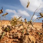 Food crisis in the Horn of Africa: What to know