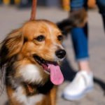 South Africa, Spain restricting dog walking amid coronavirus outbreak