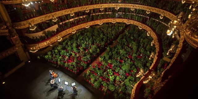 Musicians rehearse at the Gran Teatre del Liceu in Barcelona, Spain, Monday, June 22, 2020. The Gran Teatre del Liceu reopens its doors, in which the 2,292 seats of the auditorium will be occupied on this occasion by plants. (AP Photo/Emilio Morenatti)