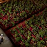 Barcelona opera house fills seats with thousands of plants in first concert since coronavirus lockdown