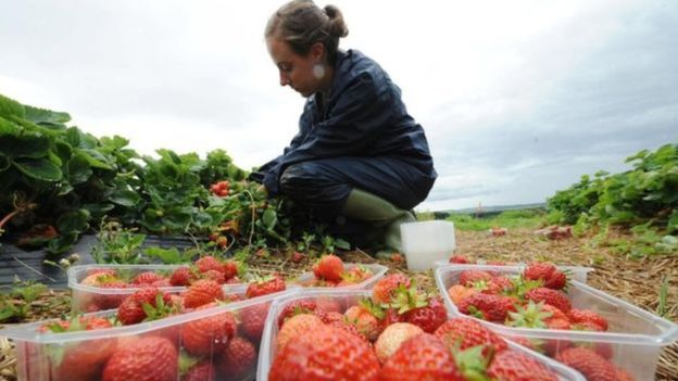 Seasonal fruit pickers will not have to quarantine on arrival