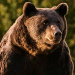 European prince killed largest bear in EU during hunting trip, environmentalists complain